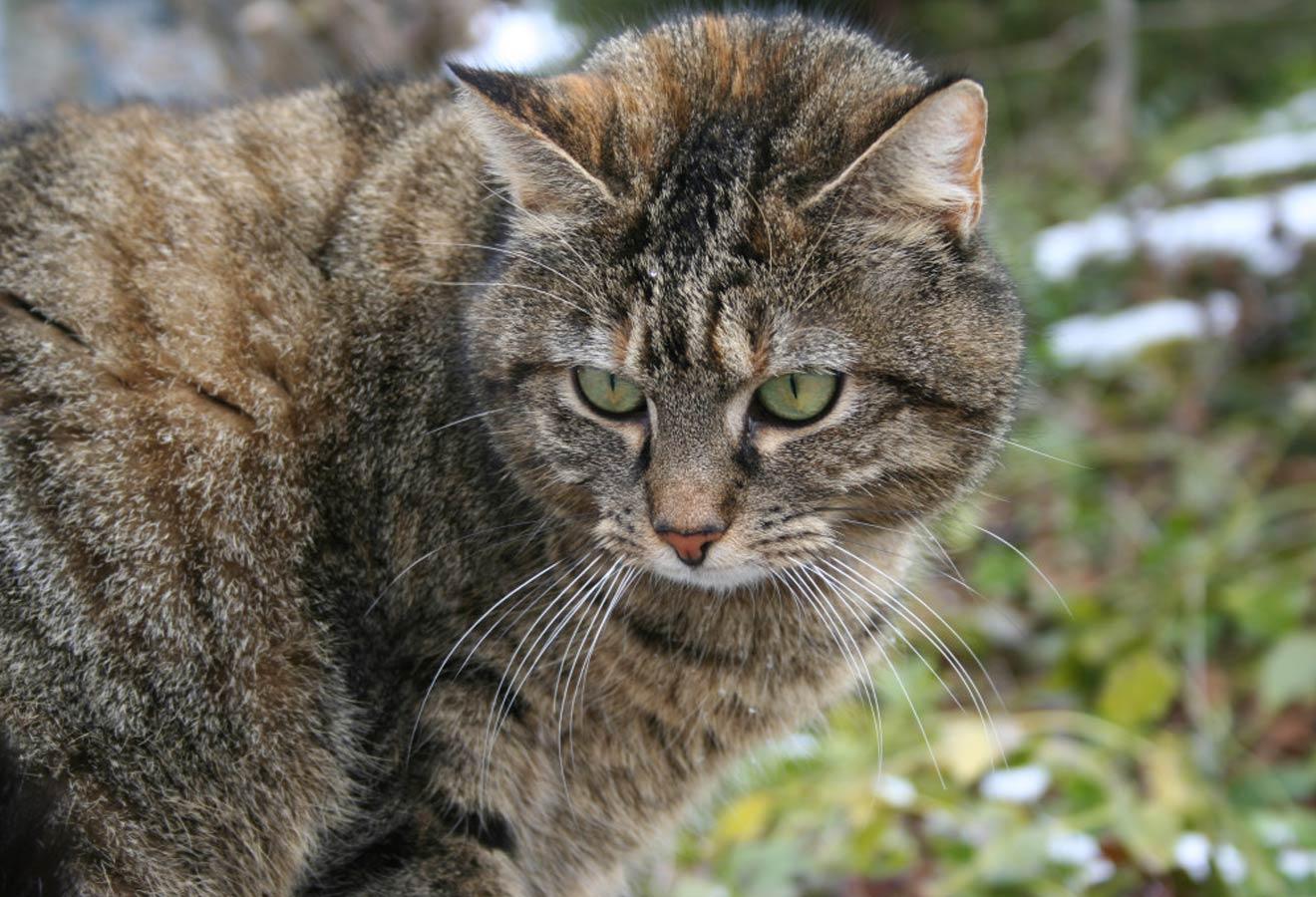 VET-Homoeopathie-Tiere-Cayra-Arcangioli-Katze